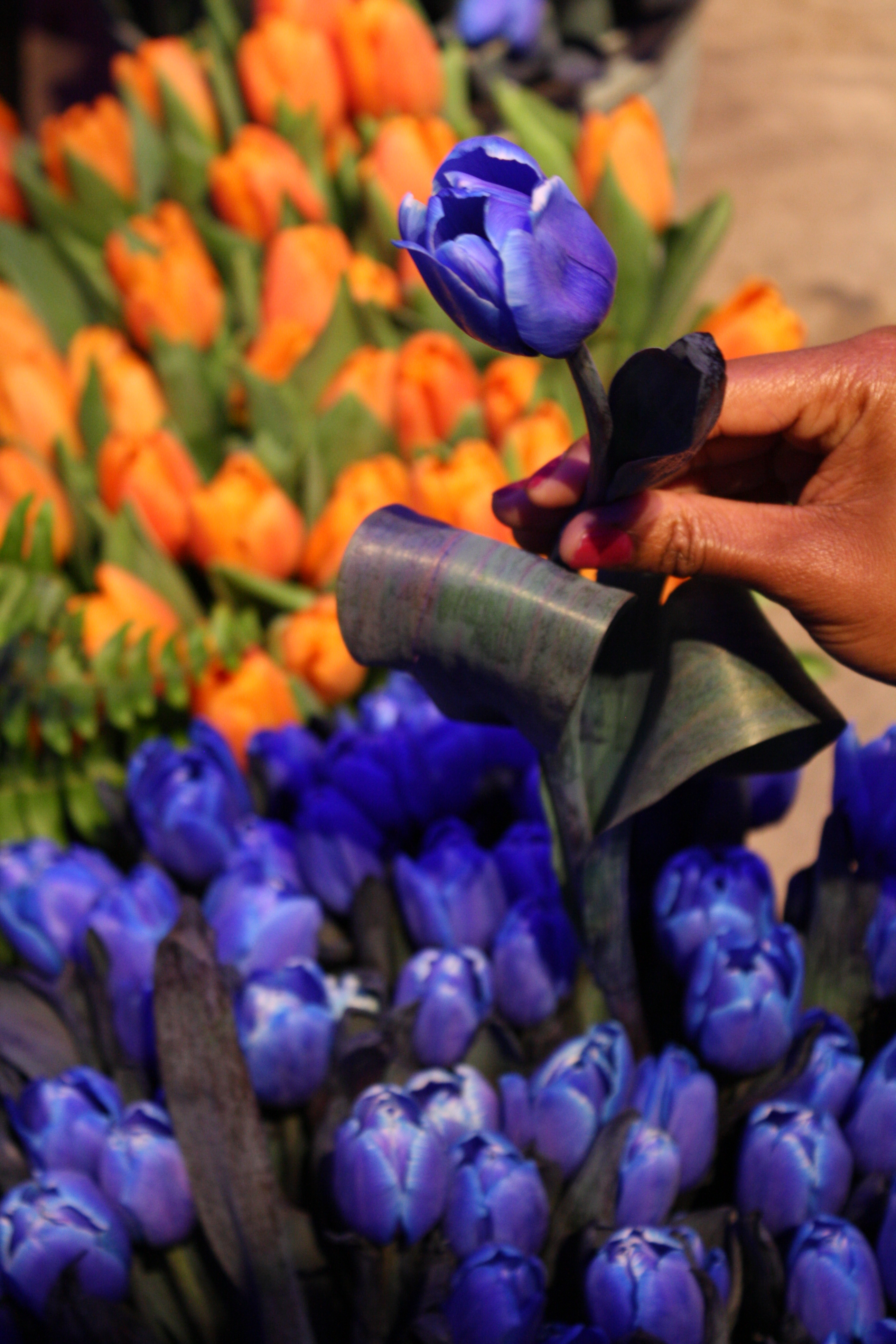 Philadelphia Flower Show Holland 6