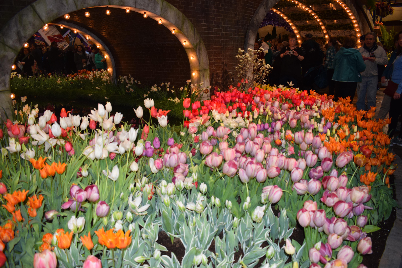 Philadelphia Flower Show Holland 1